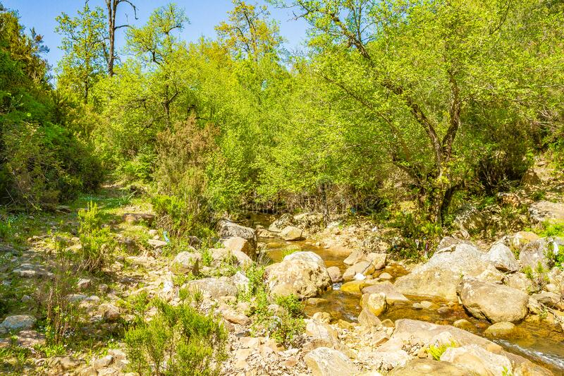 Mediterranean rainy forest royalty free stock images