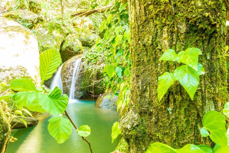 Mediterranean rainy forest stock image
