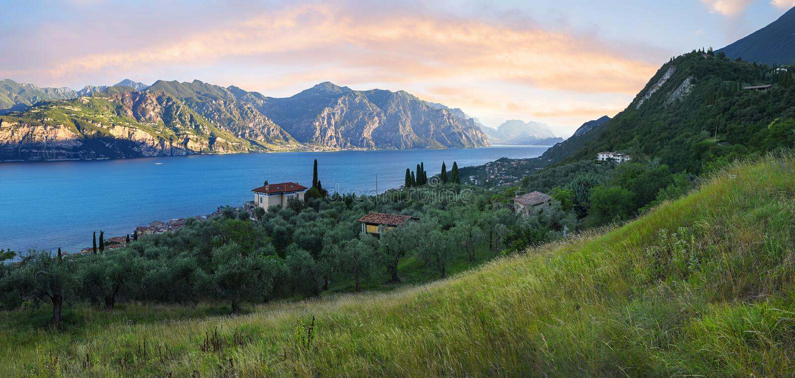 Mediterranean landscape with olive grove and rising sun stock image
