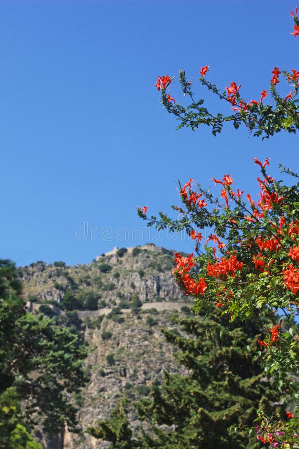Mediterranean landscape with orange blossoms and a rock stock photo