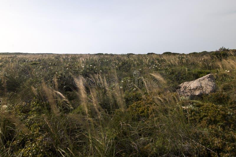 Mediterranean native vegetation. Landscape view of a field of Mediterranean native vegetation stock photos