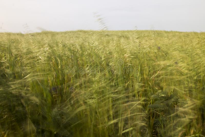 Mediterranean native vegetation. Landscape view of a field of Mediterranean native vegetation stock photo