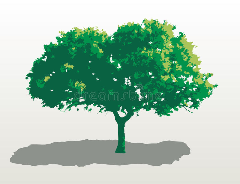 Mediterranean oak. Vector Mediterranean oak in three green colors royalty free illustration