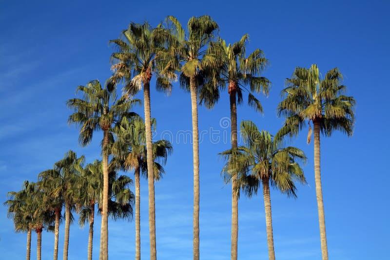 Mediterranean Palm Trees stock image