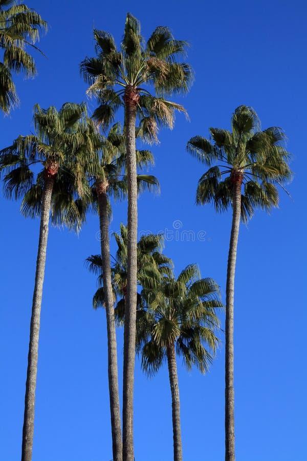 Mediterranean Palm Trees royalty free stock photo