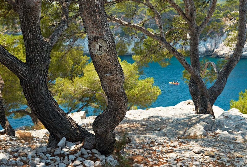 Mediterranean pine in calanque of Cassis, France stock photo