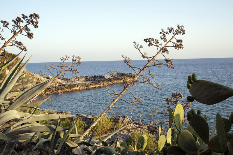 Mediterranean scrub. Beautiful view along the coast royalty free stock images