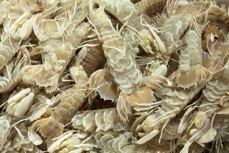 Mediterranean Sea  Crustacean Mantis Shrimp Stock Images