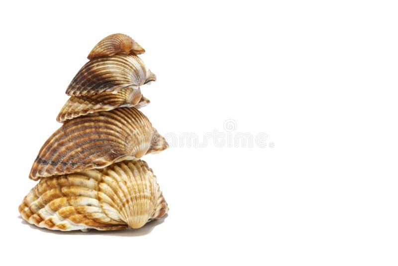 Mediterranean sea shells stock image