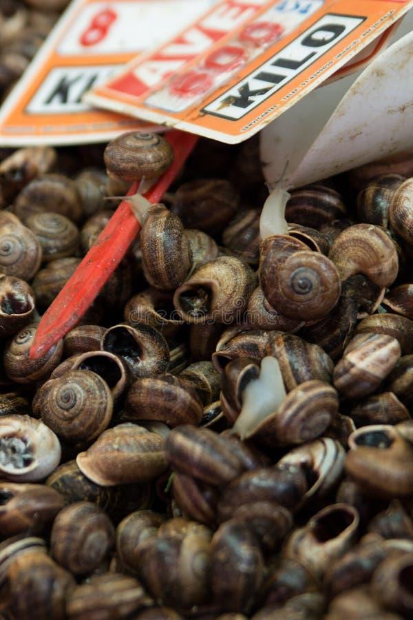 Mediterranean snails stock photography