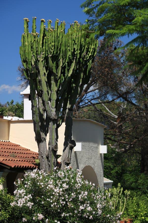 Mediterranean style home garden. Cactus and flower plant. Ischia. Island, near Naples stock photos