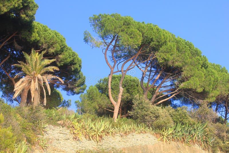 Mediterranean vegetation facing the sea royalty free stock photos