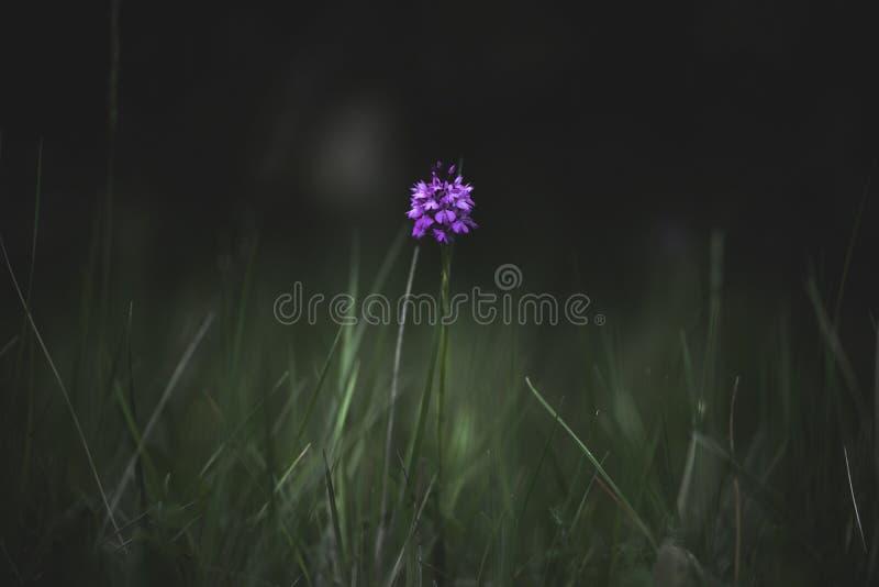 Mediterranean Wildflowers. stock photo