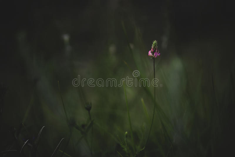 Mediterranean Wildflowers. royalty free stock image