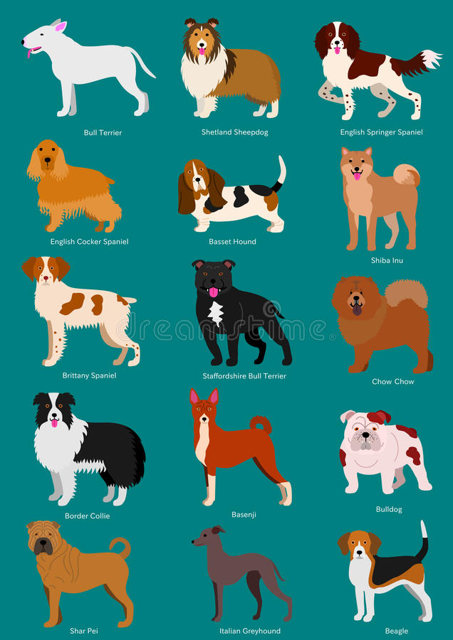 Medium Dog breeds set. With breeds names