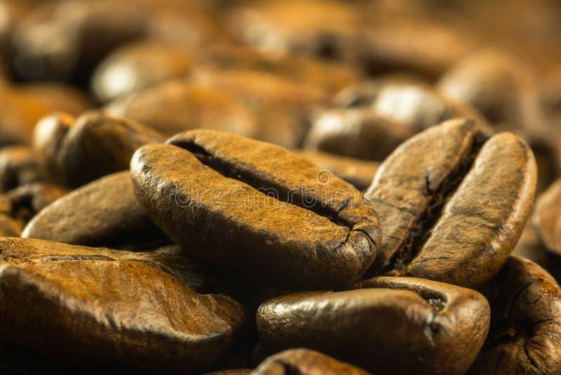 Medium roasted coffee beans stock photo