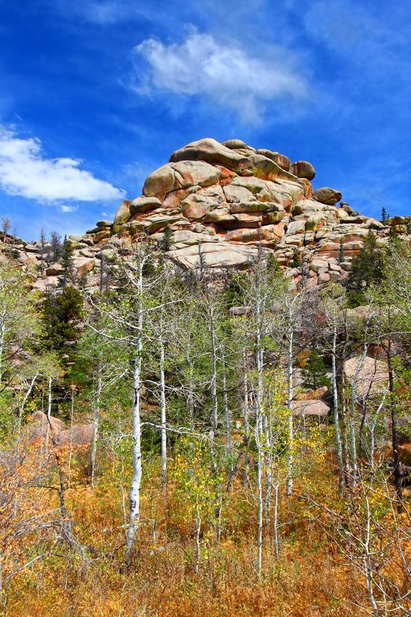 Medizin-Bogen-Staatsangehöriger Forest Landscape Wyoming stockbild