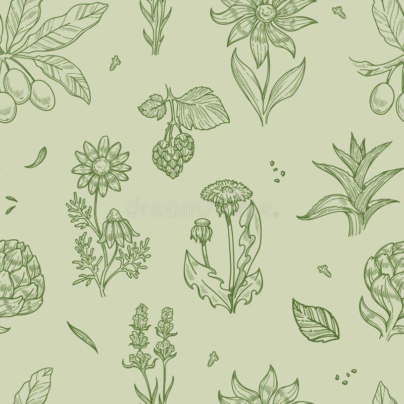 Medizinische Kräuter des nahtlosen Musters der wilden Blumen und der Anlagen lizenzfreie abbildung