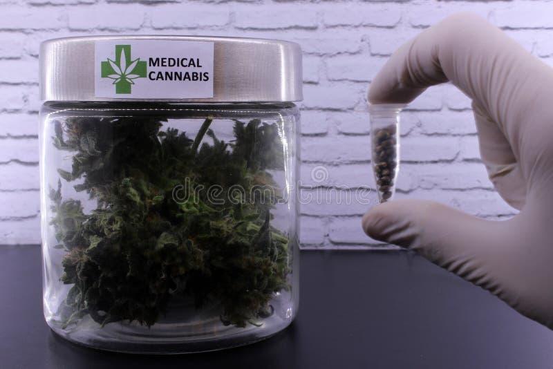Medizinische Marihuanaknospen und Hanfsamen lizenzfreie stockbilder