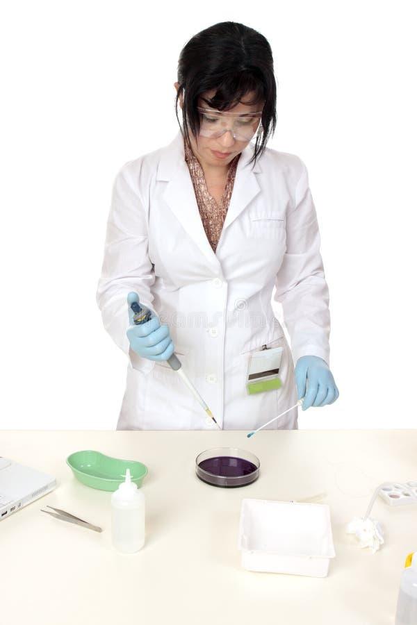 Medizinische oder wissenschaftliche Forschung lizenzfreie stockfotos