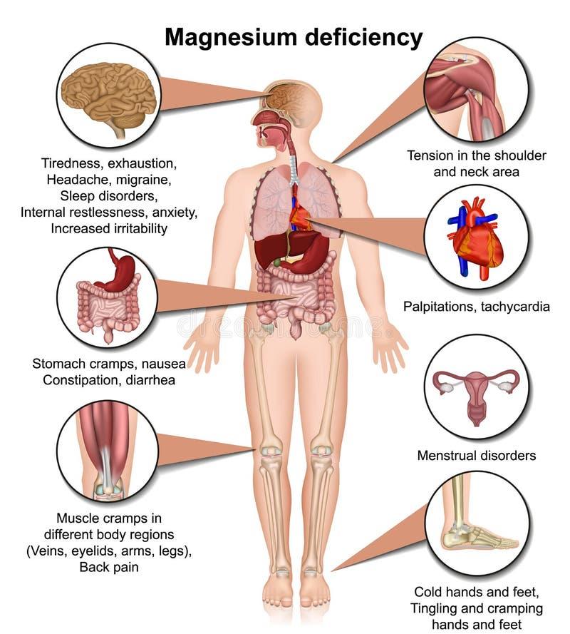 Medizinische Vektorillustration des Magnesiummangels 3d lokalisiert auf dem weißen Hintergrund infographic vektor abbildung