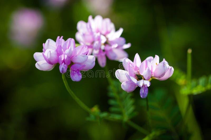 Medizinische wilde Frühlingsblumen stockbilder