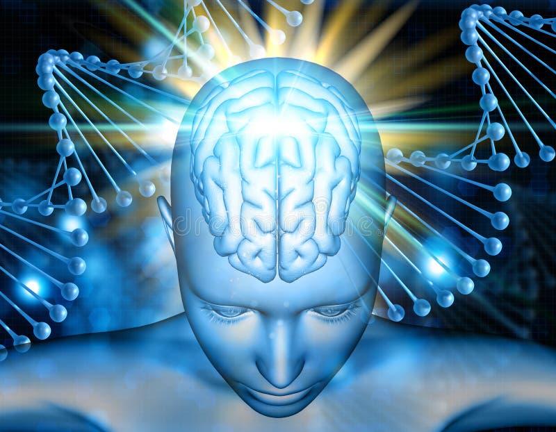 medizinischer Hintergrund 3D mit Frauenfigur mit dem Gehirn hervorgehoben lizenzfreie abbildung