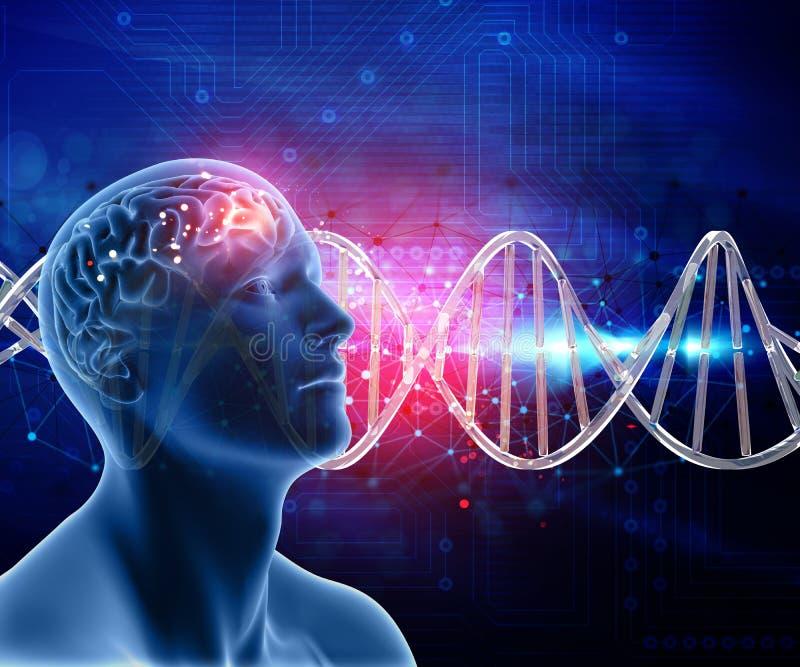 medizinischer Hintergrund 3D mit männlichem Kopf und Gehirn auf DNA-Strängen vektor abbildung