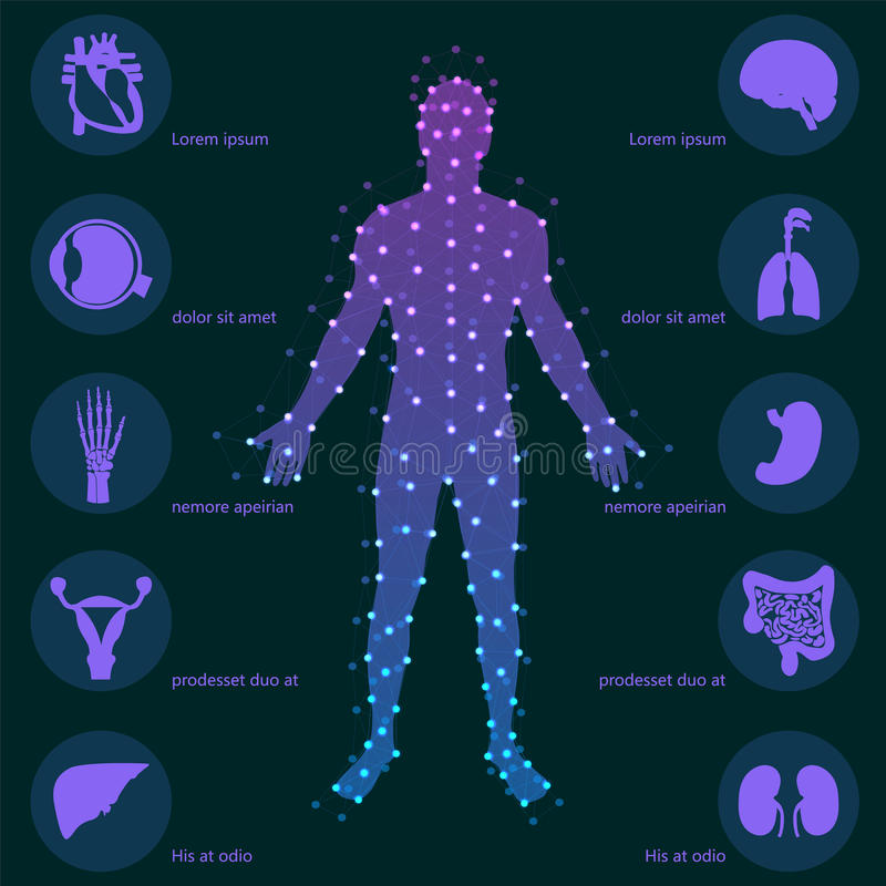 Medizinischer Hintergrund Menschliche Anatomie stock abbildung