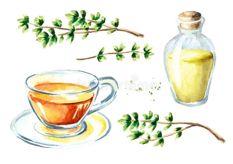 Medizinischer und Küchenkraut-Thymiansatz Infusion gemacht vom Thymianblatt Flasche des ätherischen Öls Anlage mit grünen Blätter vektor abbildung