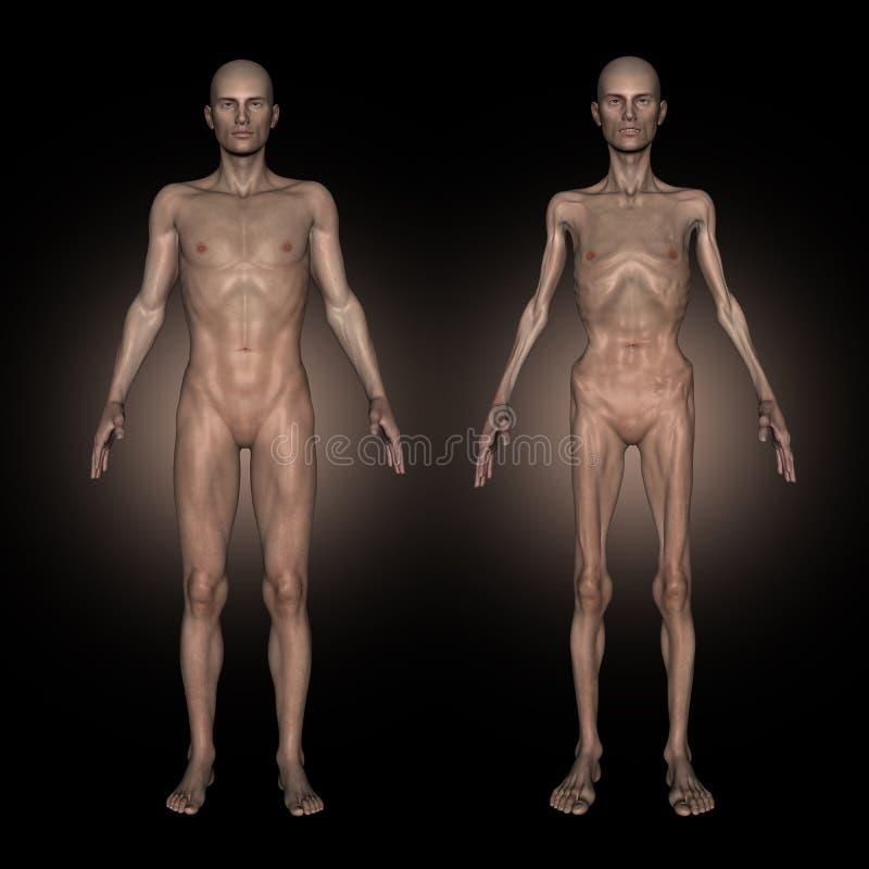 medizinischer Vertretungsmann des Bildes 3D am gesunden und ungesunden Gewicht lizenzfreie abbildung