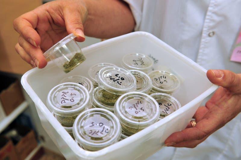 Medizinisches Marihuana stockfotos
