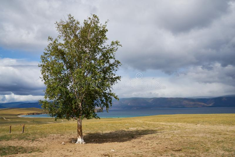 Medizinmann Tree auf Olkhon-Insel lizenzfreie stockbilder