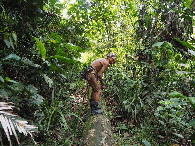 Medizinmann, welche nach Medizin im Dschungel von Siberut sucht stockfotografie