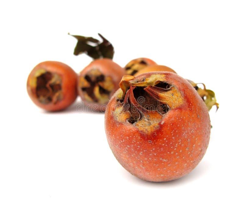 Medlar Fruit Stock Image