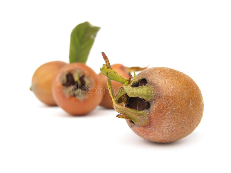 Medlar fruit. The Common Medlar (Mespilus germanica) is a large shrub or small tree, and the name of the fruit of this tree. Despite its Latin name, which means stock images