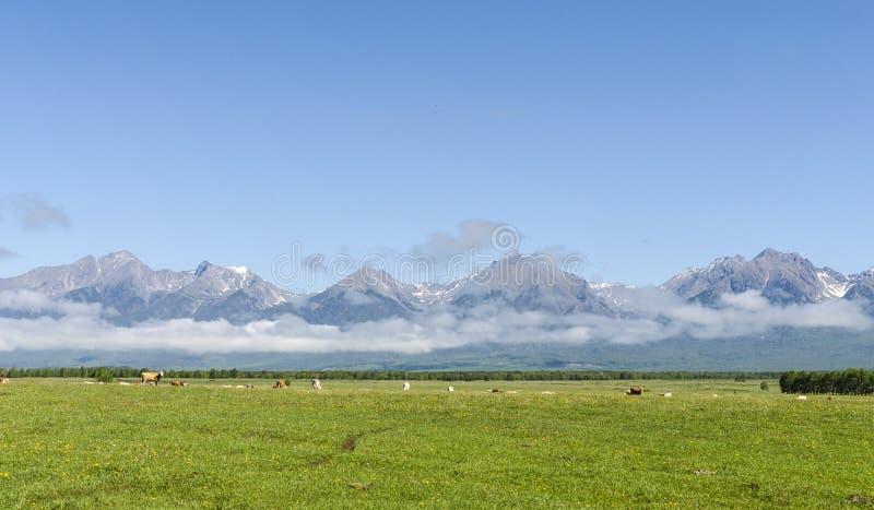 Medow verde davanti alle montagne di Arshan immagine stock libera da diritti