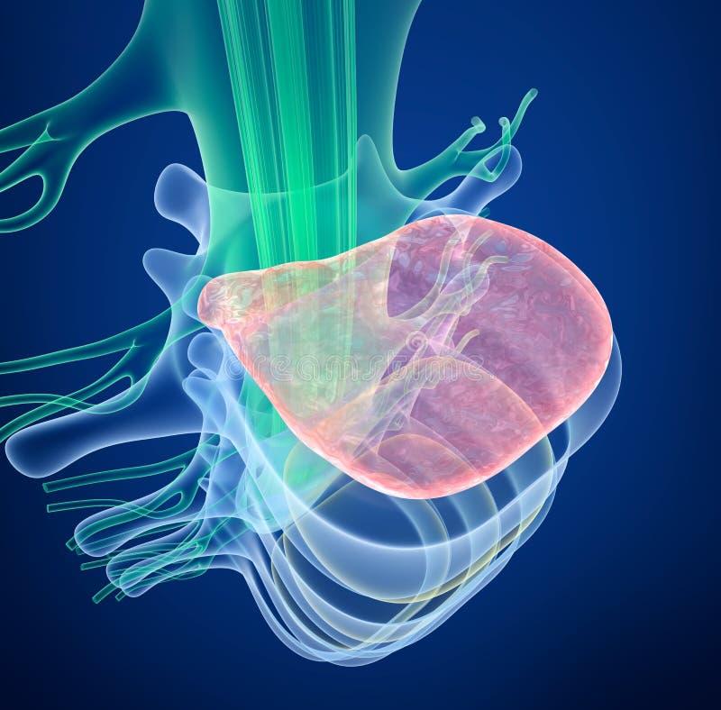 Medula espinal sob a pressão do disco inflando, opinião do raio X ilustração royalty free