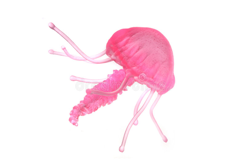 medusa arkivfoto