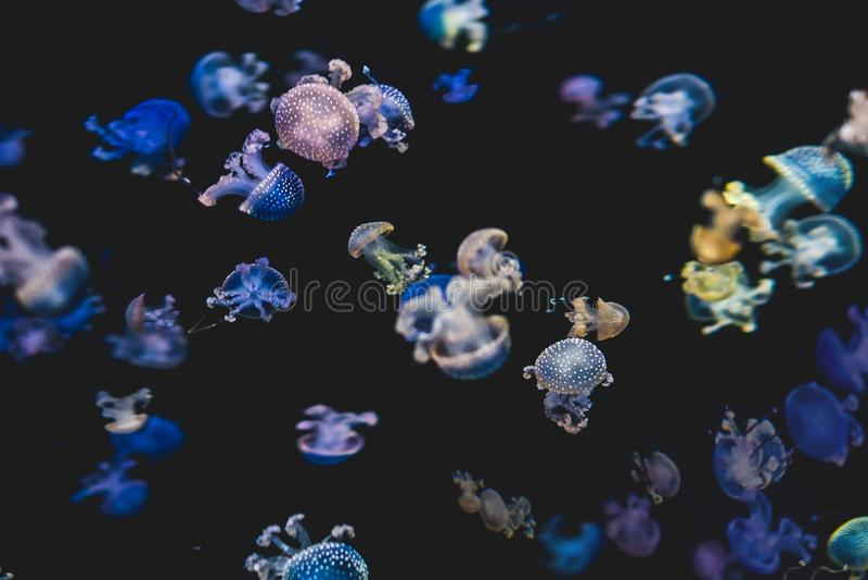 Medusa coloridas no fundo preto - o branco manchou o jellyfi fotos de stock royalty free