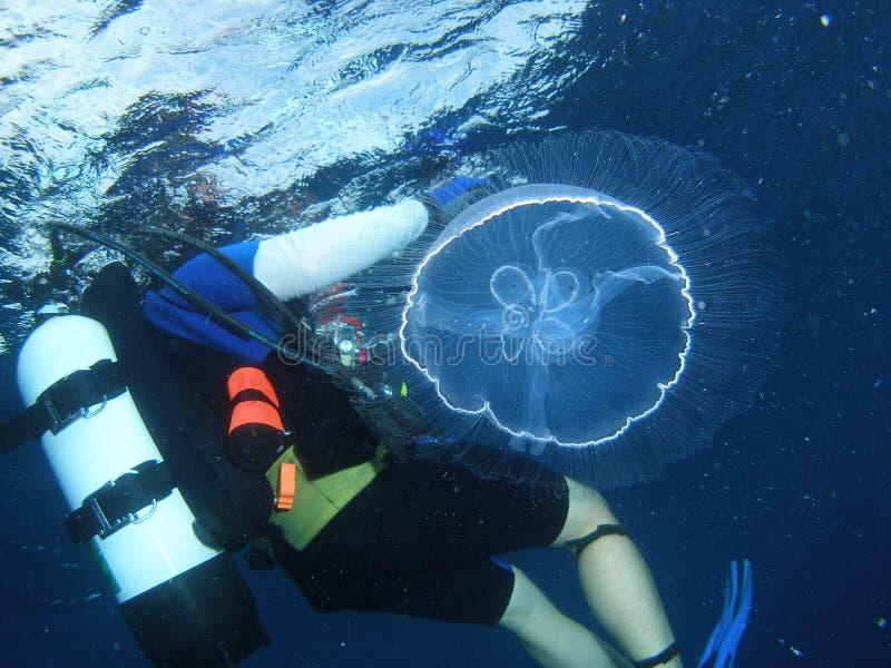 Medusa e mergulhador imagens de stock royalty free