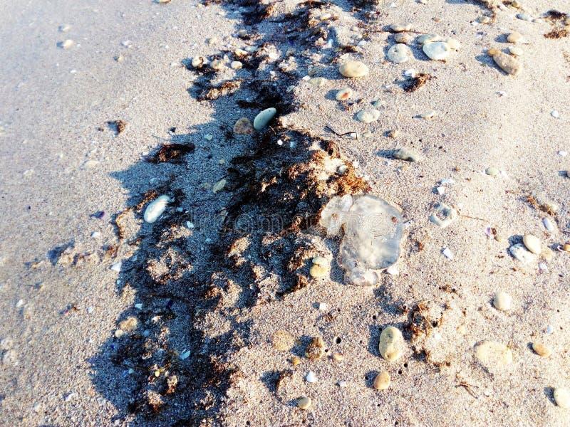 Medusa inoperantes que encontram-se na areia do mar imagem de stock