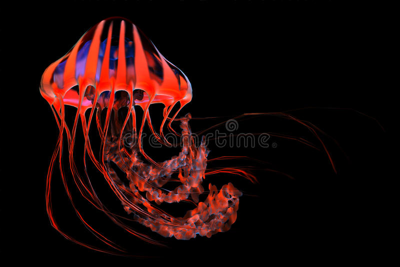 Medusas rayadas azules rojas fotos de archivo libres de regalías