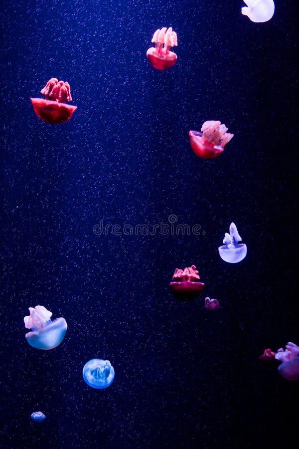 Meduse in acqua fotografia stock