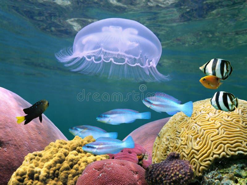 Meduse con i coralli e pesci fotografie stock libere da diritti