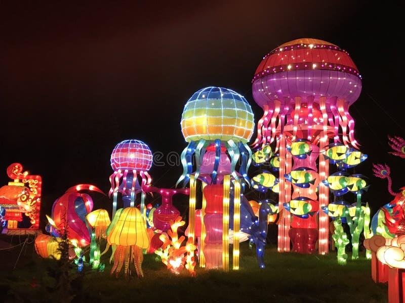 Meduse delle luci della Cina immagine stock