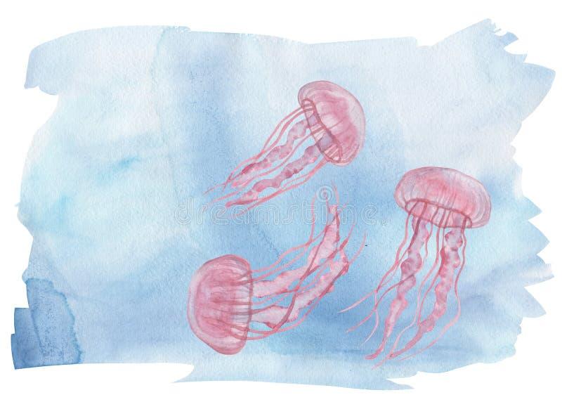 Meduse di rosa dell'acquerello illustrazione di stock