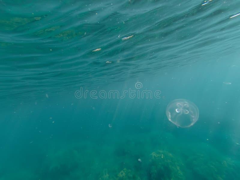Meduse nel mare profondo in chiara acqua blu fotografie stock