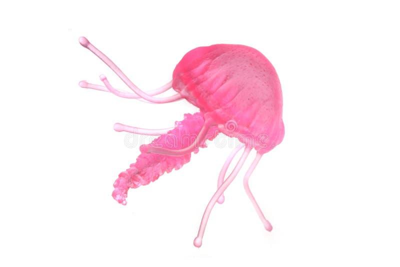 meduza zdjęcie stock