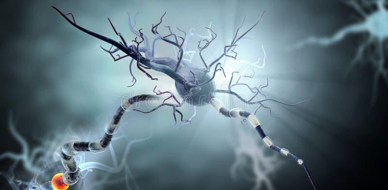 Medyczna ilustracja, nerw komórki royalty ilustracja